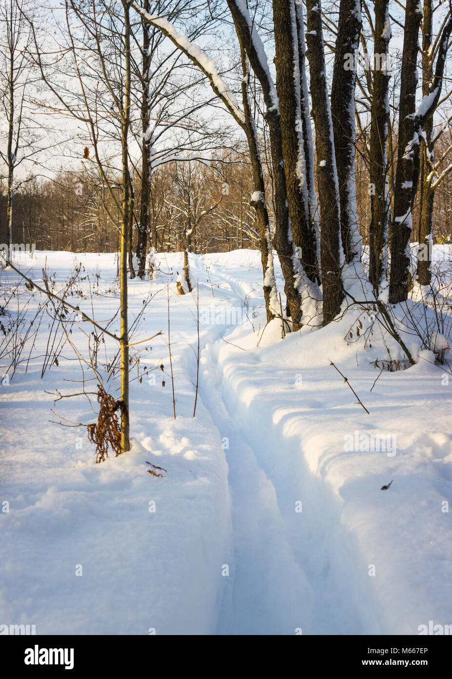 Ski track in deep snow in a forest glade Stock Photo