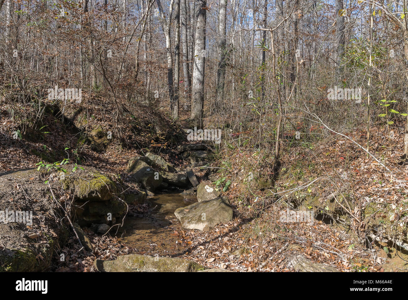 A boulder-lined watershed in an appalachian mountain forest. - Stock Image
