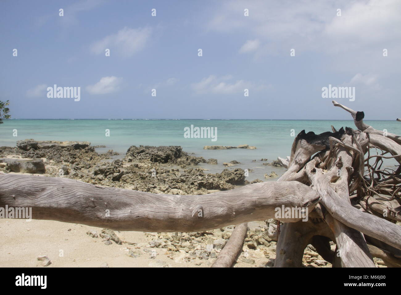 Belitung 2018, done fulfilled my dream to sit in that branch. Amazing. - Stock Image