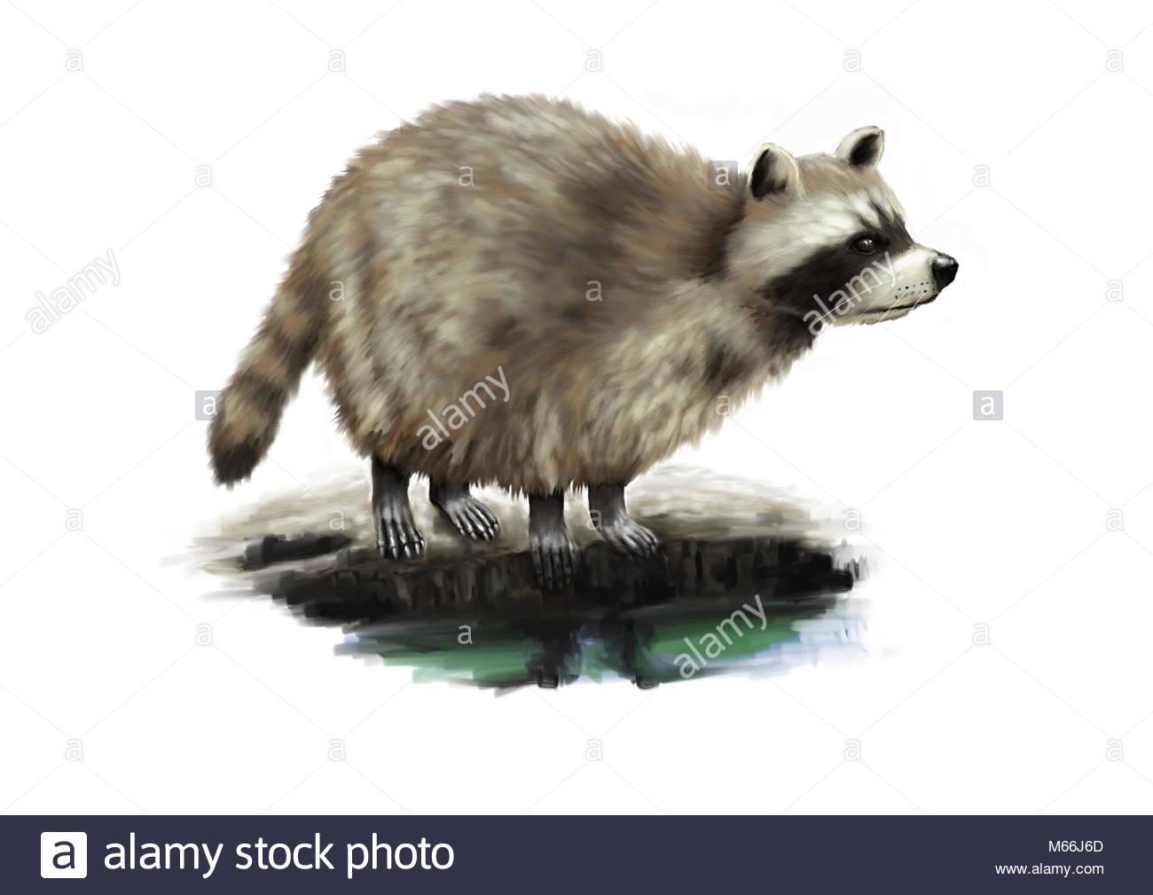 Cute Racoon Digital Painting