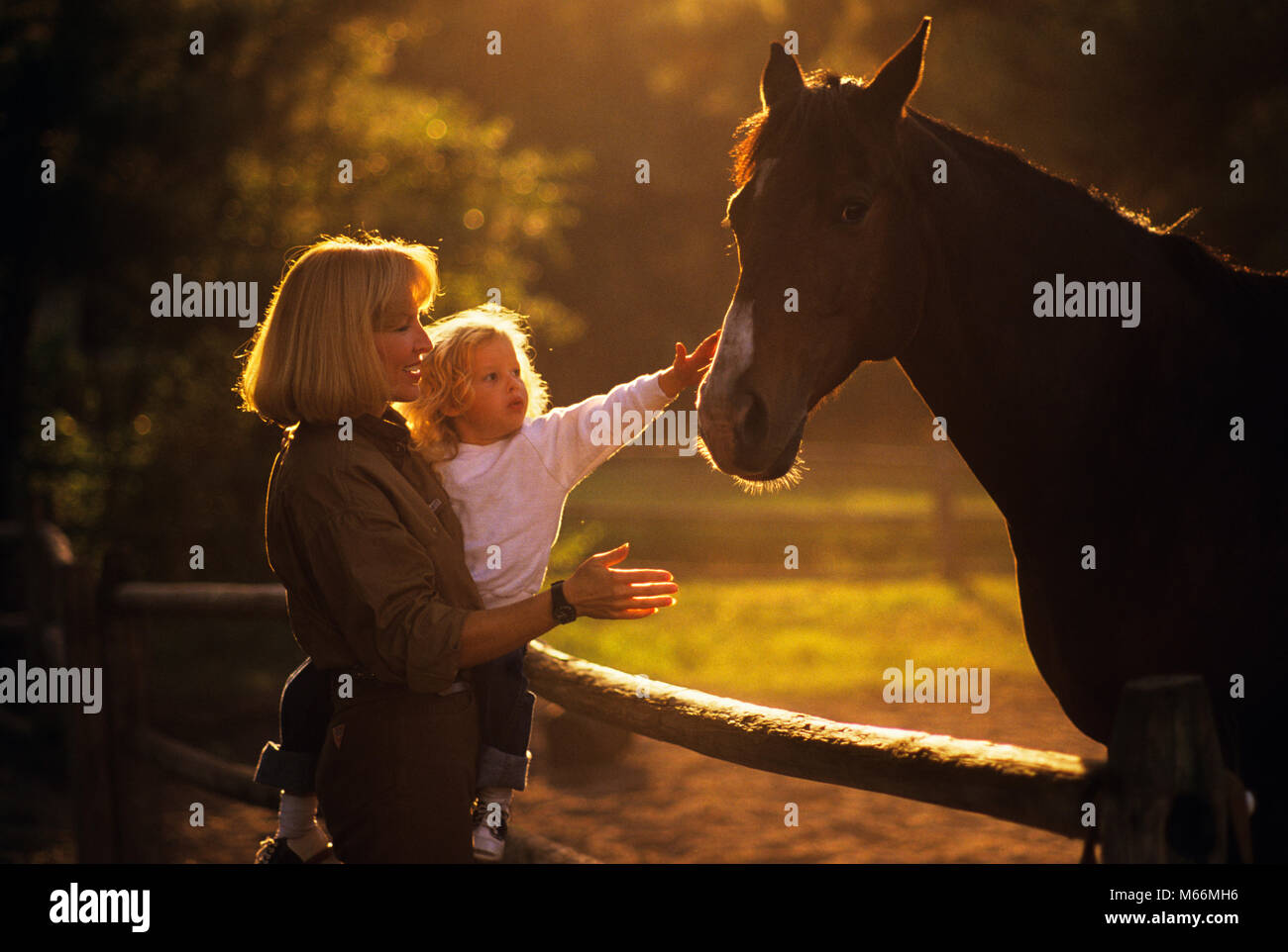 1980s BACKLIT SILHOUETTED BLOND WOMAN MOTHER HOLDING CHILD DAUGHTER REACHING OUT TO TOUCH HORSE - kh9658 LAF002 - Stock Image