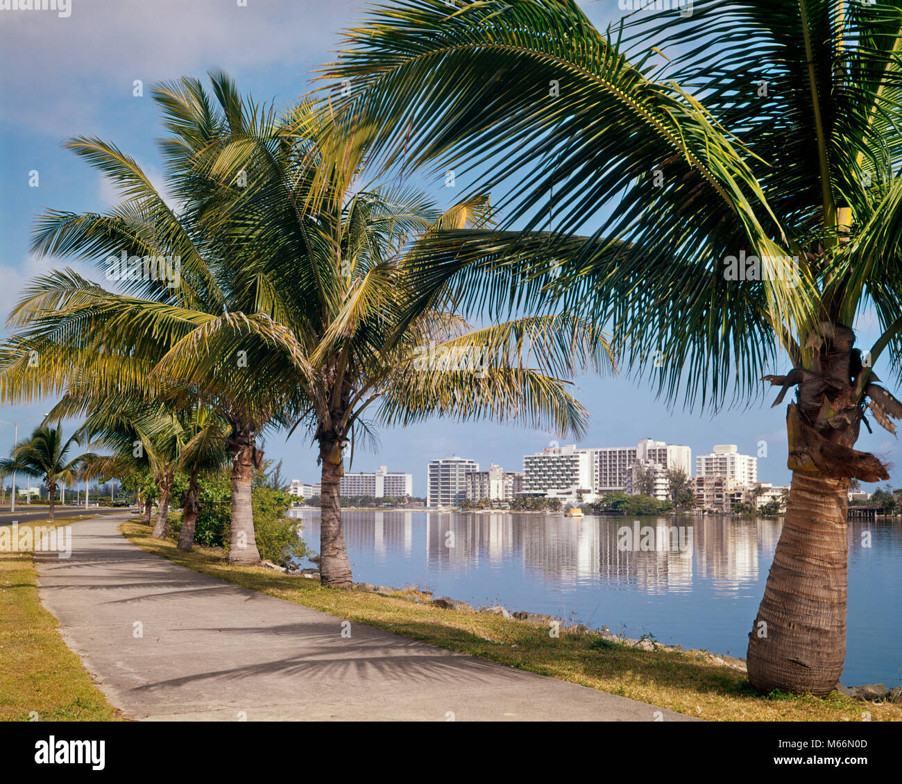 1960s VIEW OF CONDADO BEACH HOTELS FROM PALM TREE LINED ROAD SAN JUAN PUERTO RICO - kr13200 HAR001 HARS SAN JUAN - Stock Image