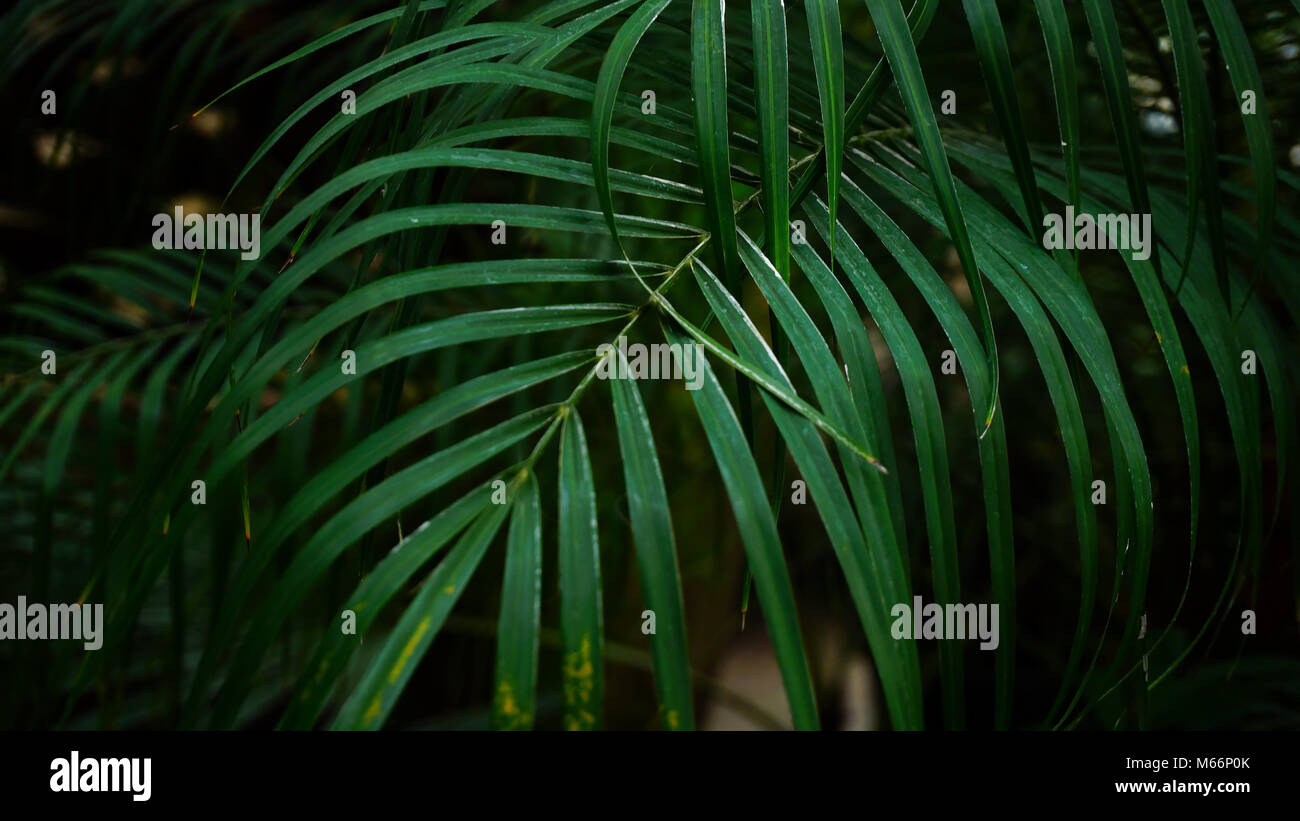 Weaving plants grow on fence in park. - Stock Image