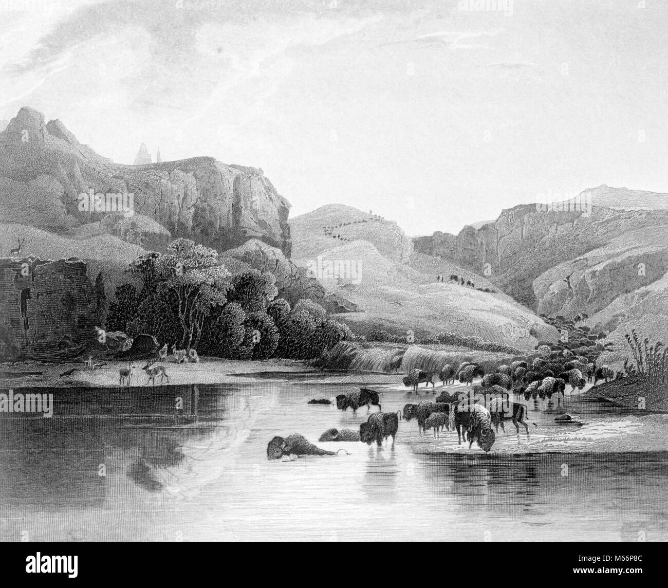 1800s 1830s HERDS OF BISON AND ELK CROSSING THE UPPER MISSOURI RIVER IN THE AMERICAN WEST - q61260 CPC001 HARS UPPER - Stock Image