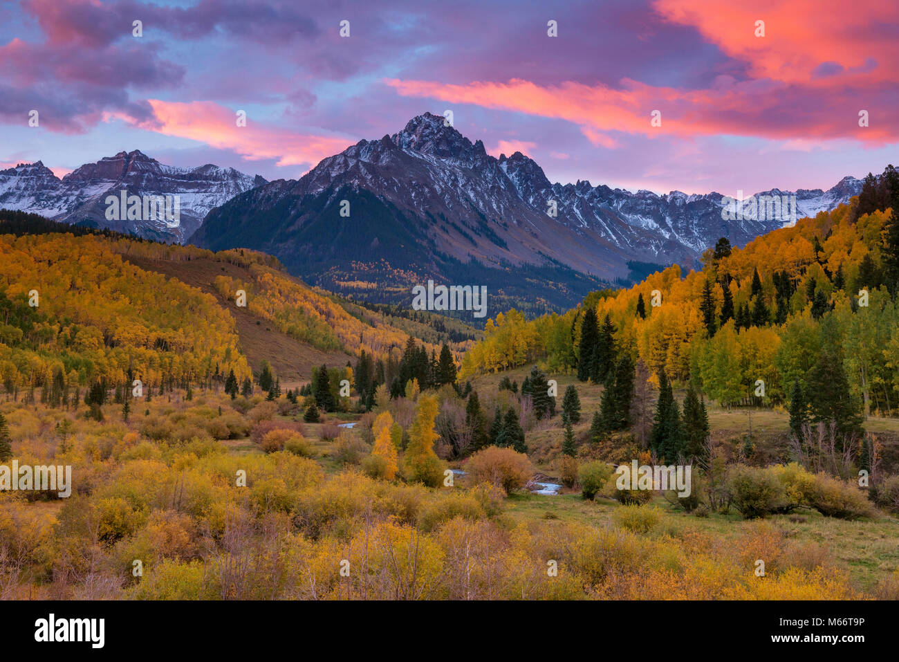 Dawn, Aspen, Willow Swamp, Mount Sneffels, Dallas Divide, Uncompahgre National Forest, Colorado - Stock Image