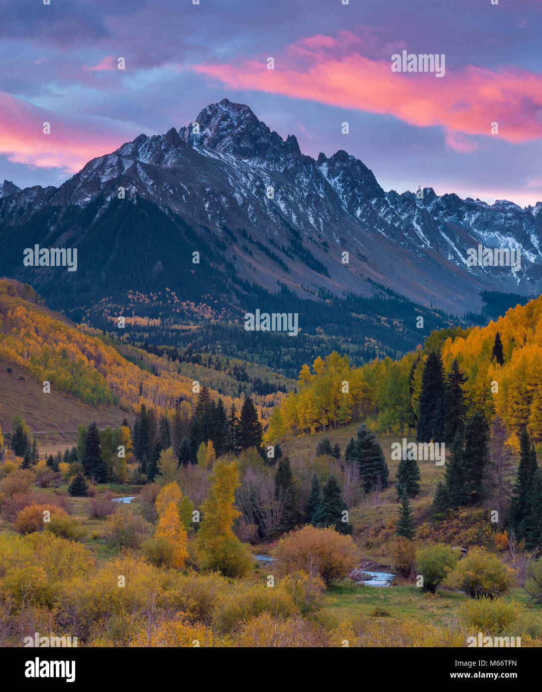 Dawn, Aspen, Willow Swamp, Mount Sneffels, Uncompahgre National Forest, Colorado - Stock Image