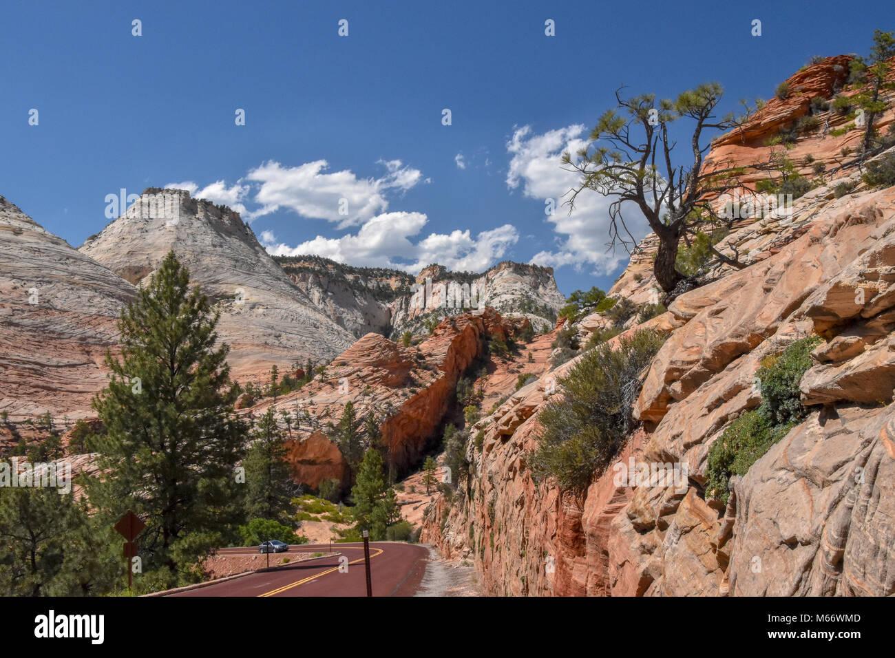Zion National Park has 289 species of birds,75 mammals ( including 19 species of bats),32 retiles inhabiting the - Stock Image