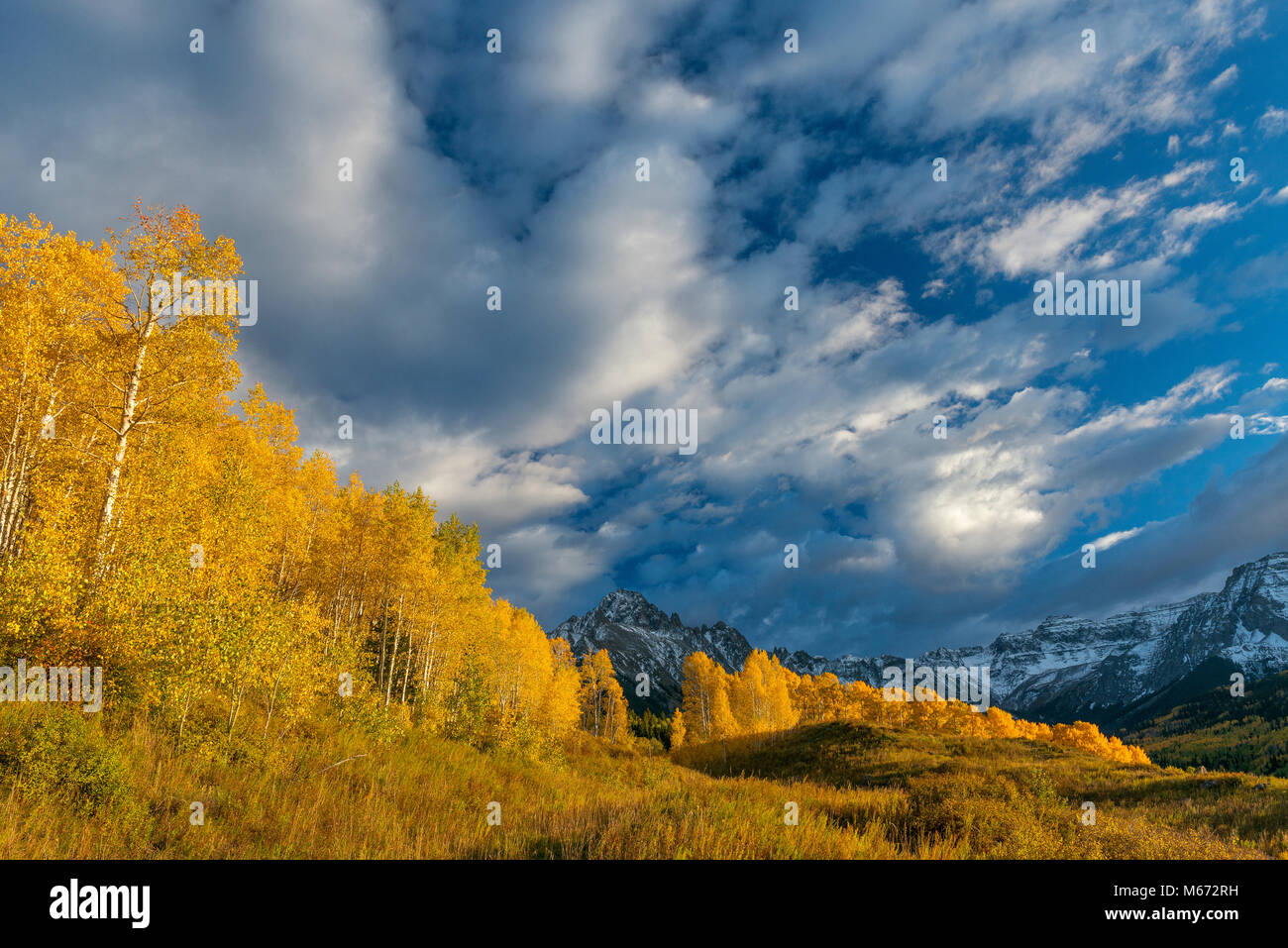 Aspen, Mount Sneffels, Dallas Divide, Uncompahgre National Forest, Colorado - Stock Image