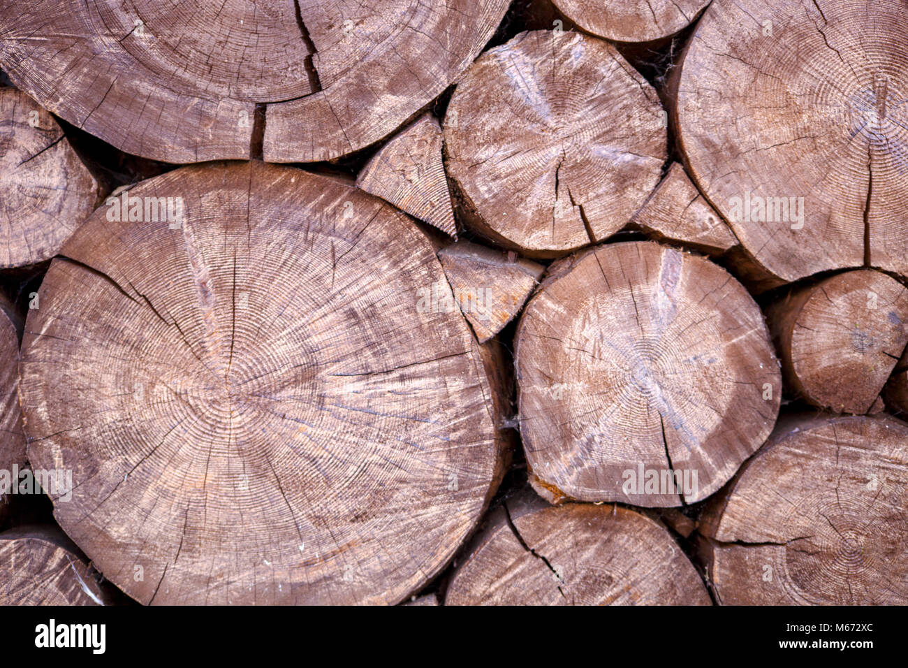 Photo of felled round logs - Stock Image