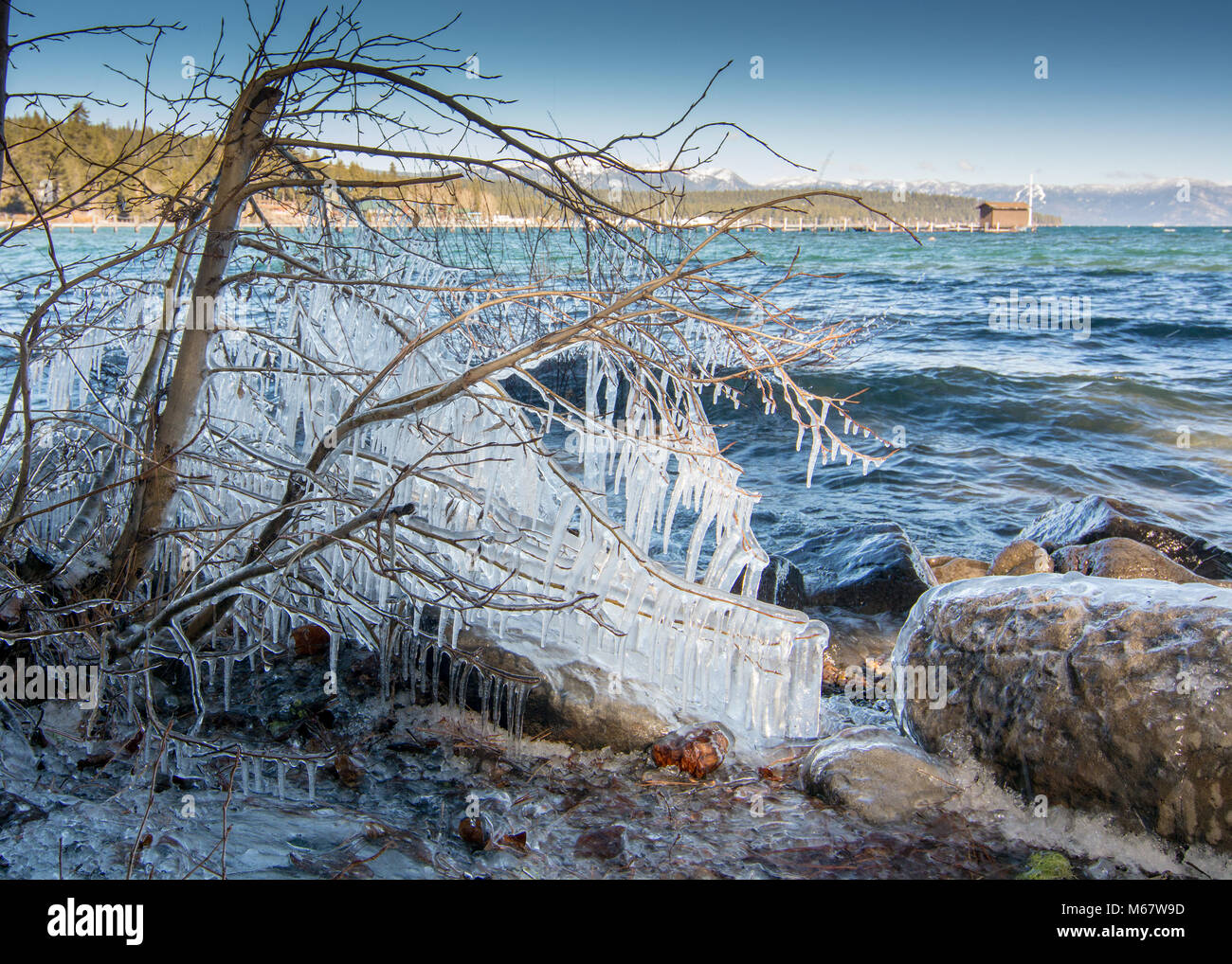 Ice combs forming on tree at the shore of Lake Tahoe, California, USA, in the end of the winter of 2018. Stock Photo
