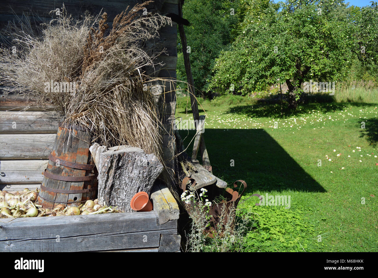 Historical old barn wall with ancient wooden barrel and dry plants - Stock Image