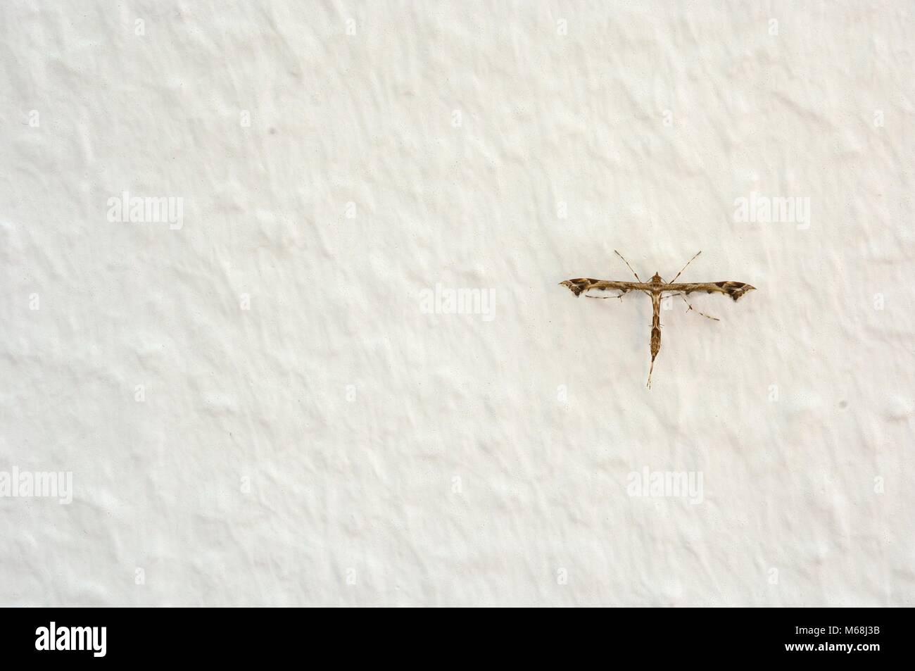 Insekt an einer Mauer - Stock Image