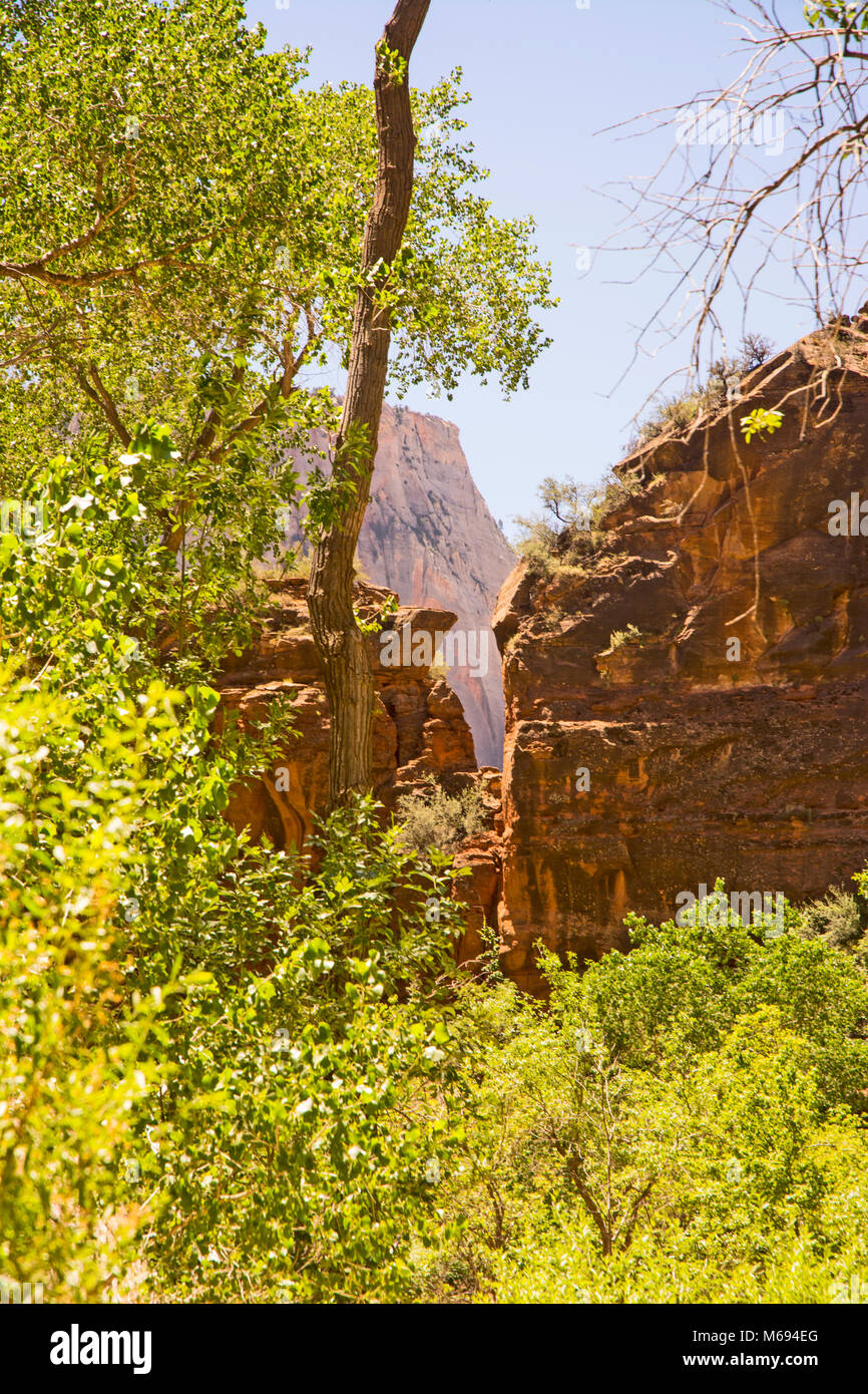 Trees and Shrubs and Cliffs at Zion. Stock Photo