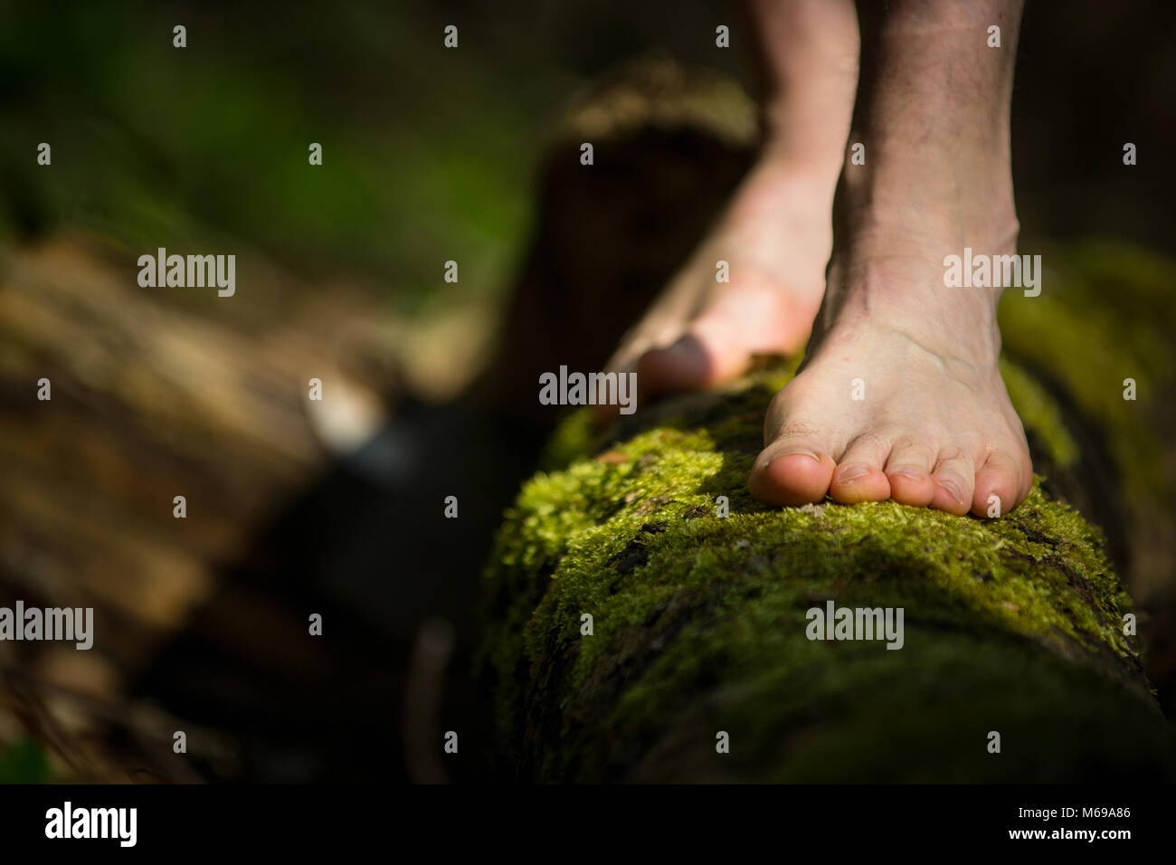 A Barefooted Man Standing on a Log Covered with Bright Green Moss. - Stock Image