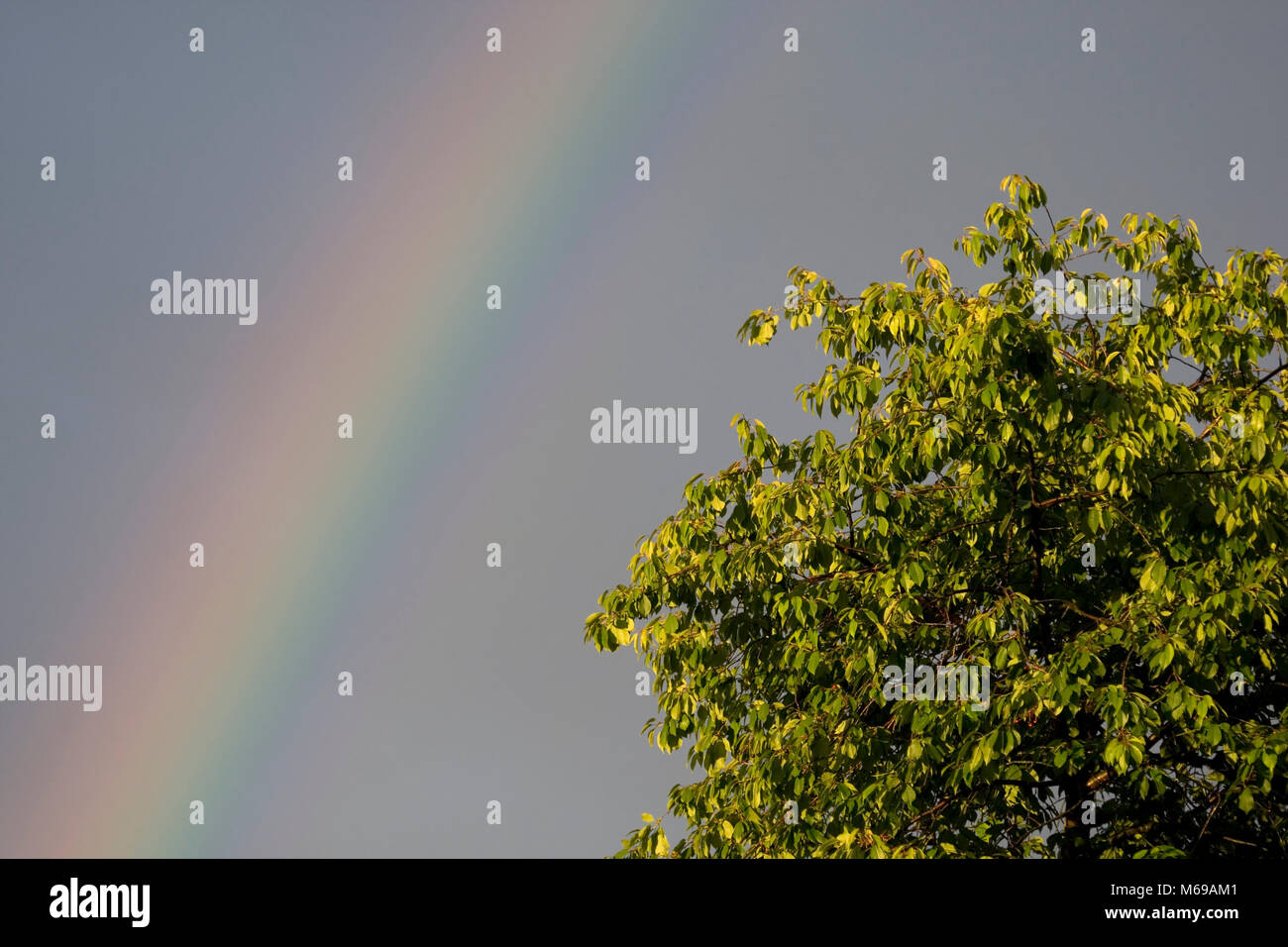 Treetop bathed in sunlight with rainbow in the background, London, July 2016 - Stock Image