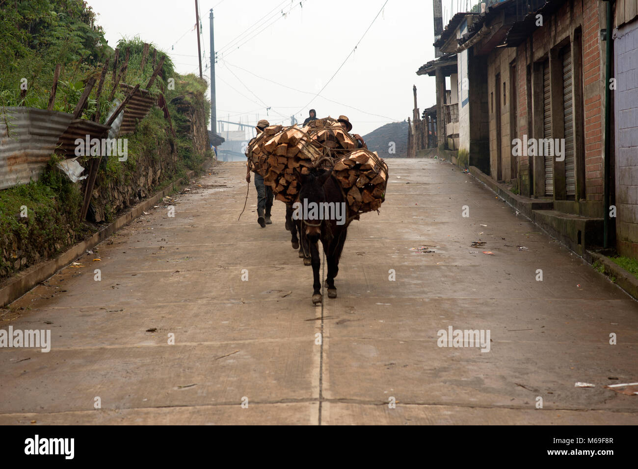 A donkey carrying firewood through the street. San Gaspar Chajul, Ixil Triangle, El Quiché department, Guatemala. - Stock Image