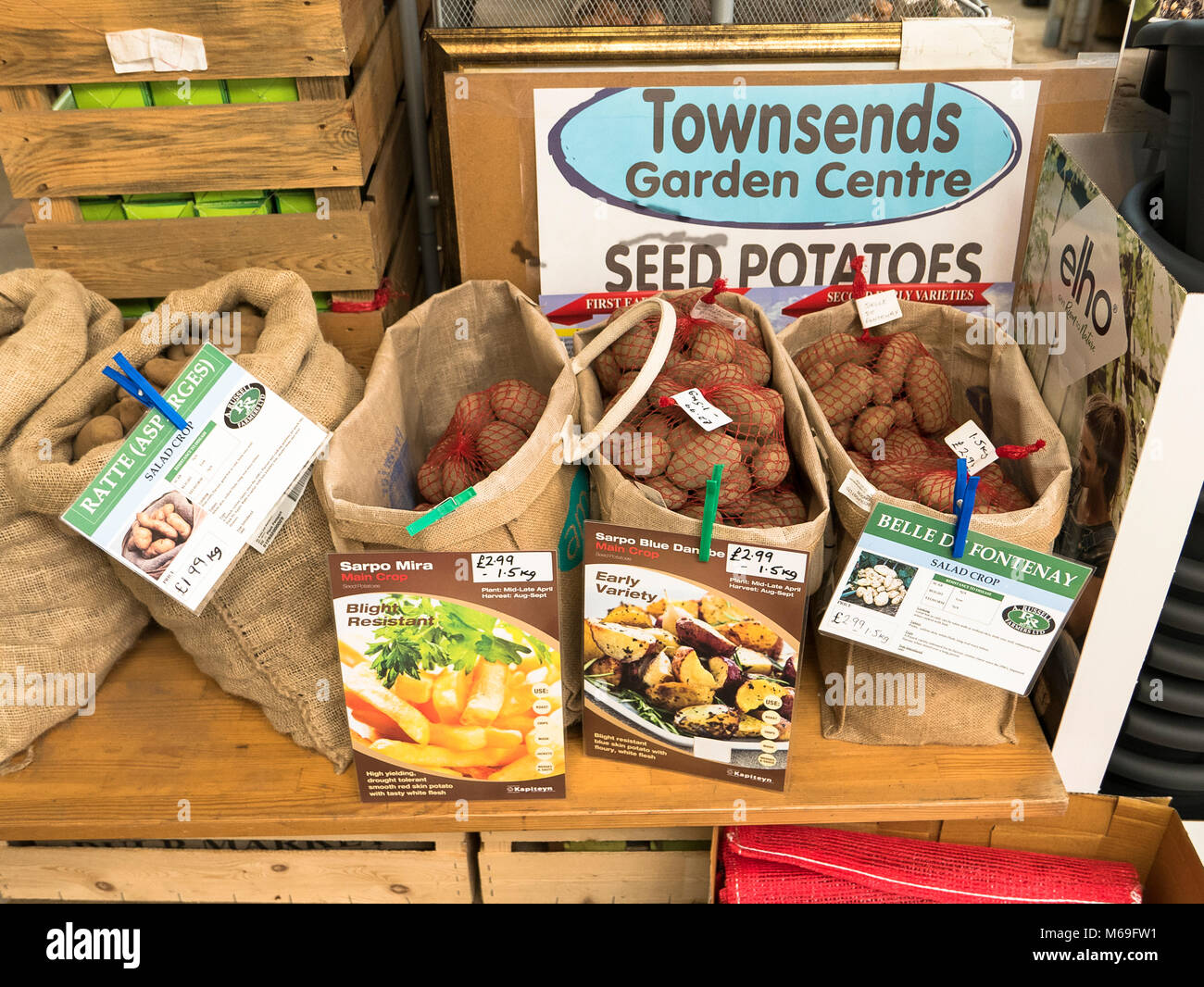 New seed potatoes displayed in an English garden centre in February Stock Photo