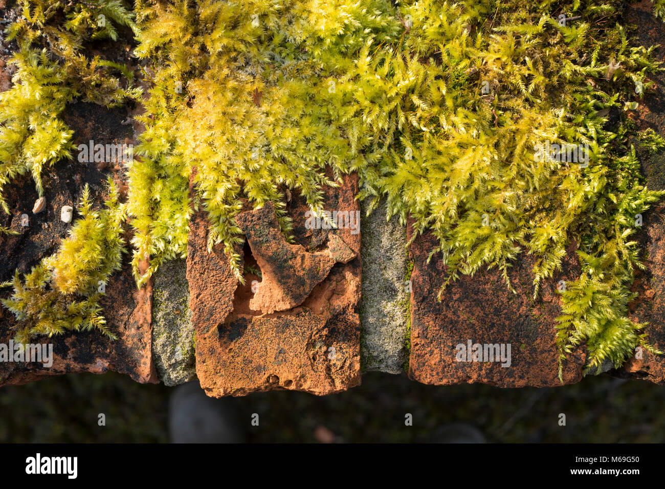 Modern Moss Wall Decor Adornment - Gallery Wall Art - factografia.com