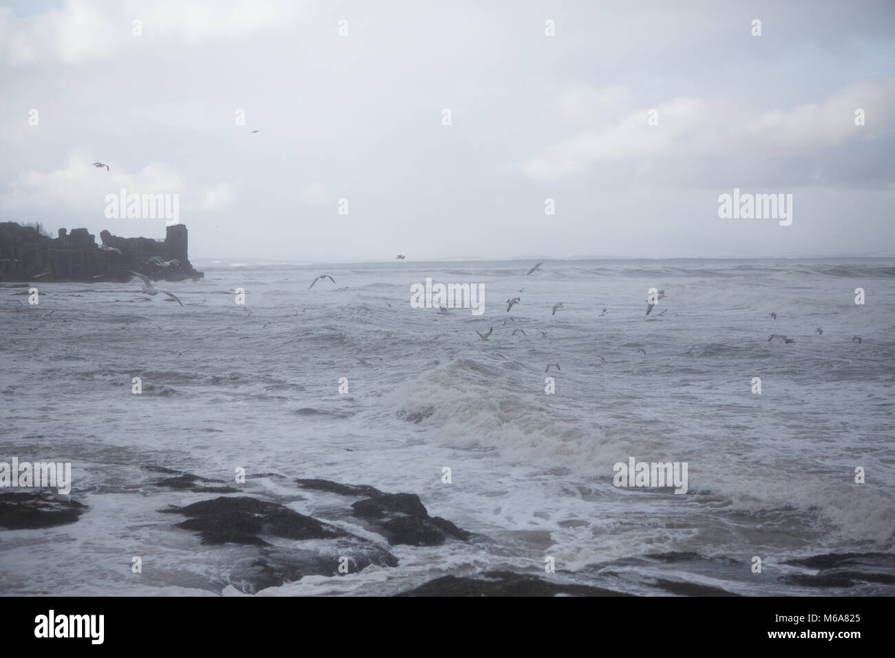 St. Andrews coastline. 1st Mar, 2018. UK Weather: Seagulls fly against the strong wind and waves along the St. Andrews - Stock Image