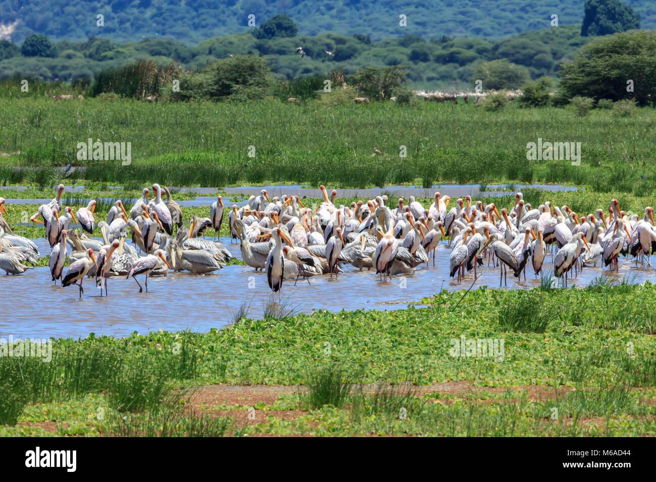 Lake Manyara National Park - Stock Image