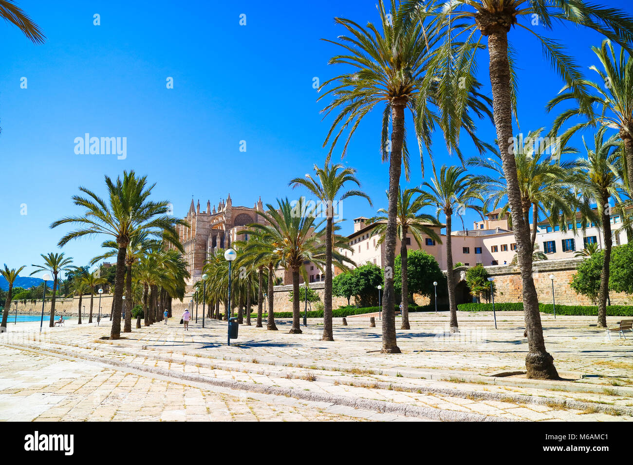 Palma de Mallorca, Spain. Central park with palm trees in the summer - Stock Image