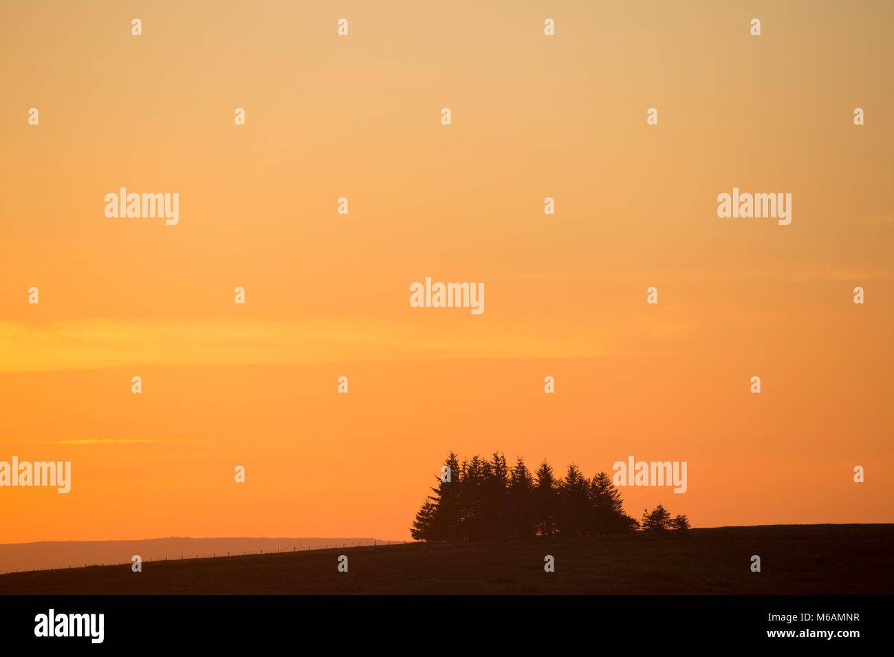 Small copse of conifer trees seen in silhouette against a dramatic, bright, colourful orange sky at sunset - near - Stock Image