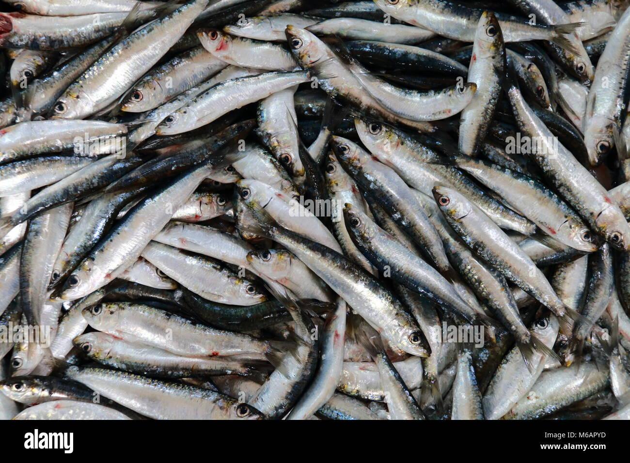 Fresh anchovies - Stock Image