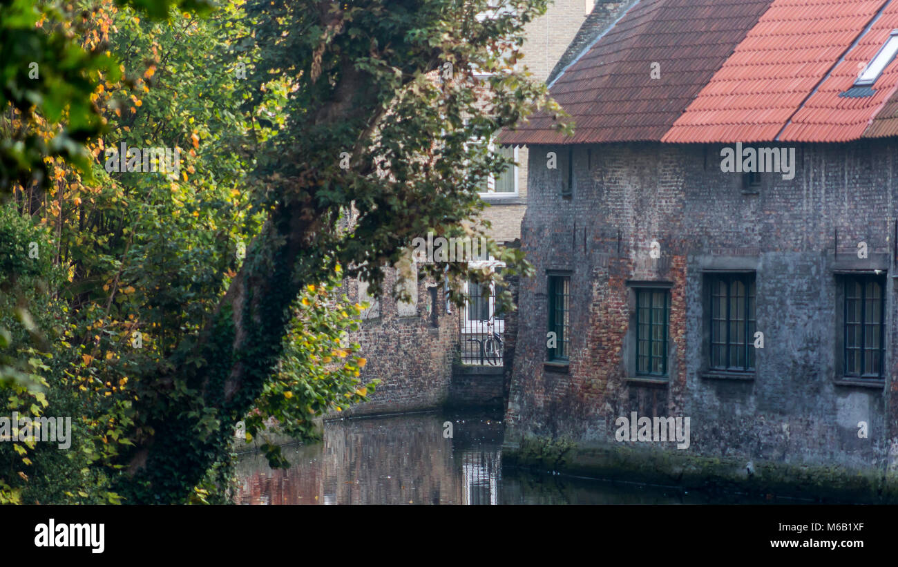 Sunlit trees foreground ancient bricked Bruges homes on the famous waterway canal system Stock Photo
