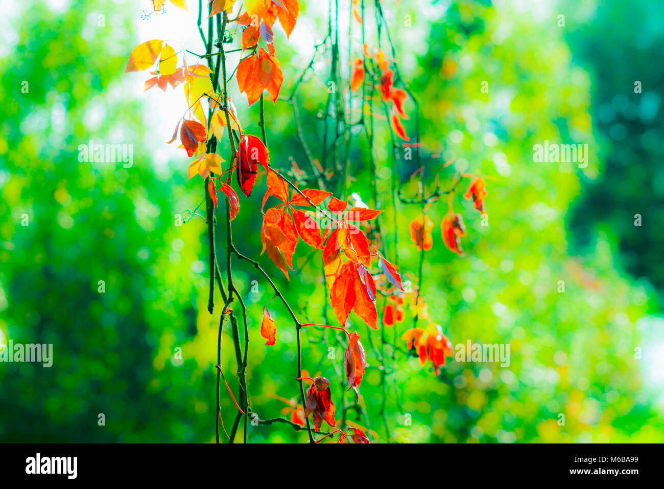 Backround with autumn leaves - Stock Image