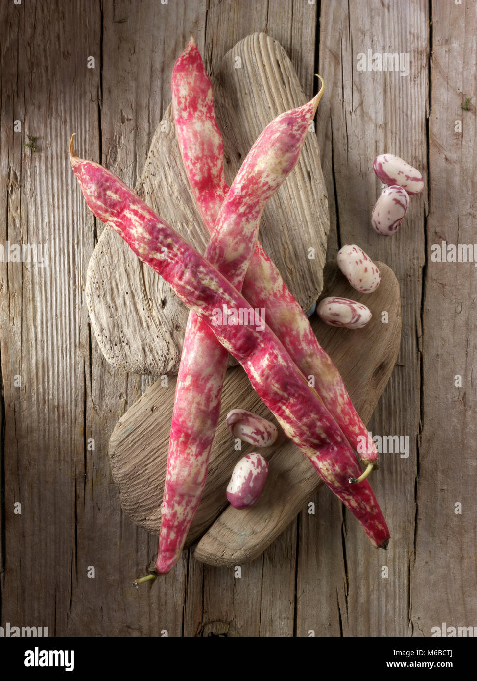Fresh picked borlotti beans  also known as the cranberry bean or Roman bean - Stock Image