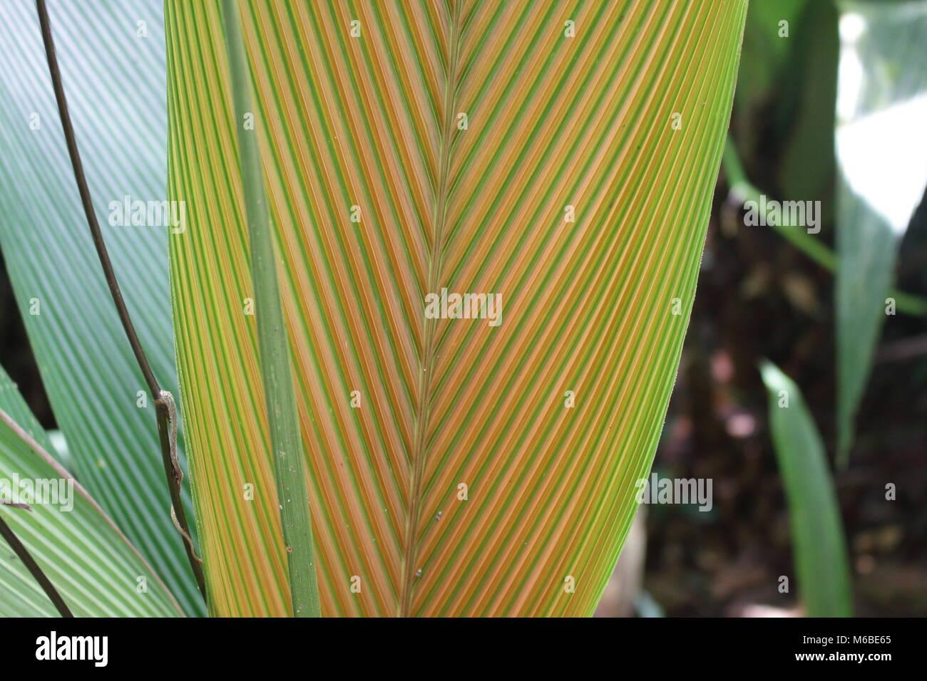 Tasteful Leaf Stock Photo