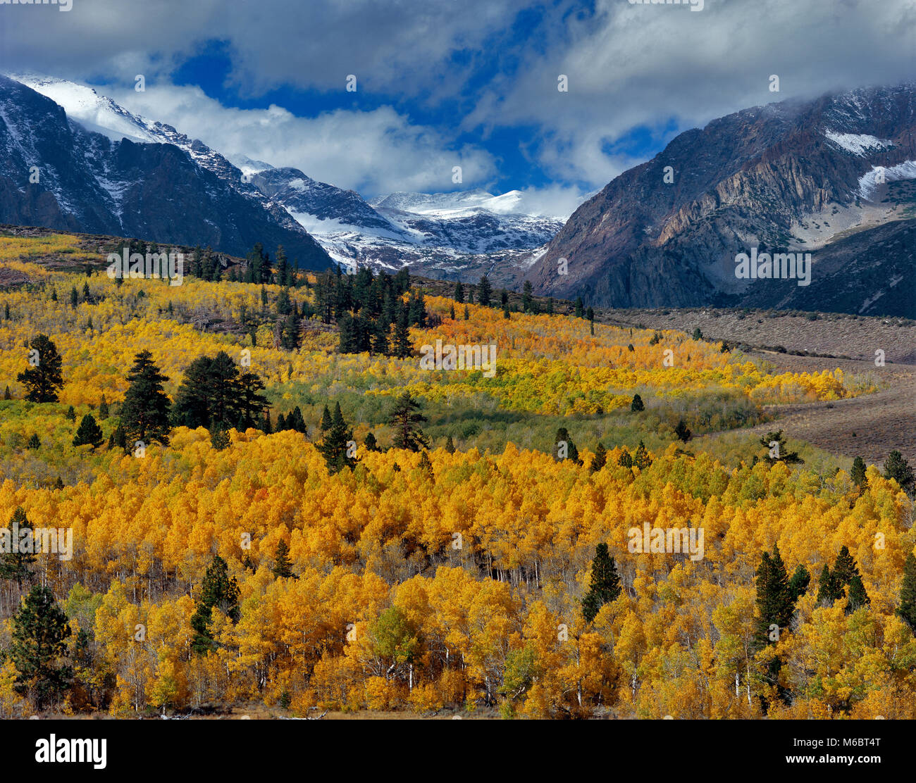Clearing Storm, Aspens, Parker Peak, Ansel Adams Wilderness, Inyo National Forest, Eastern Sierra, California - Stock Image