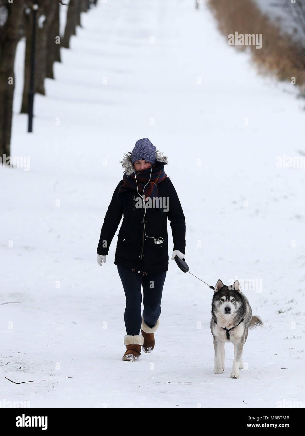 Siberian husky dating