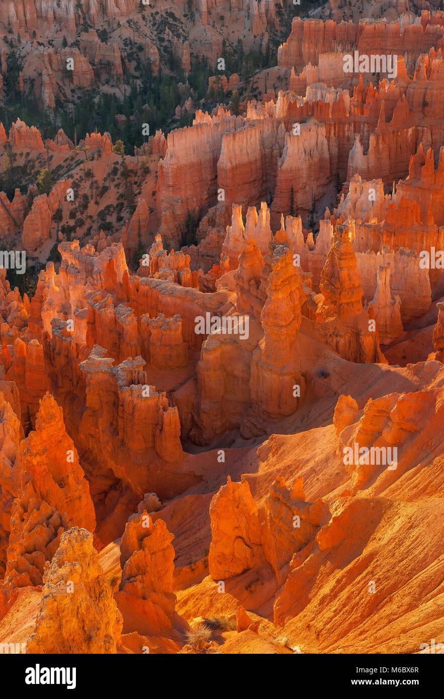 Sunrise, Wall Street, Bryce Canyon National Park, Utah - Stock Image