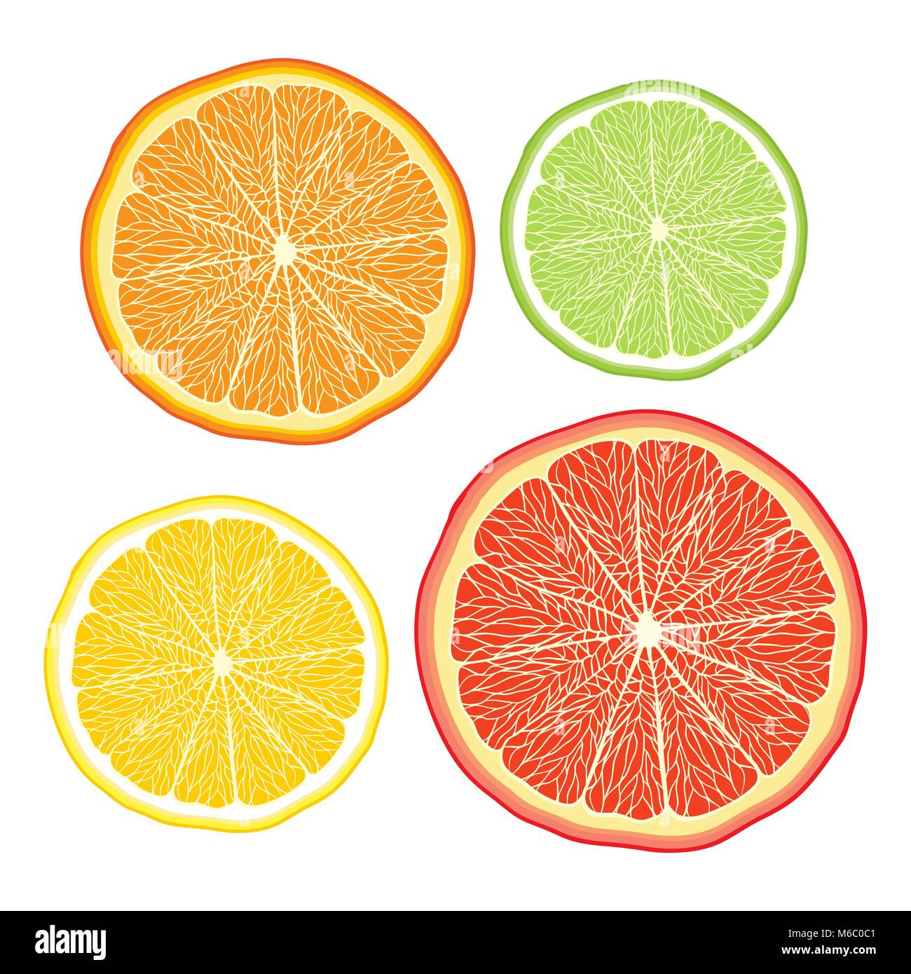 Vector stylised orange, lemon, grapefruit, lime on white - Stock Vector