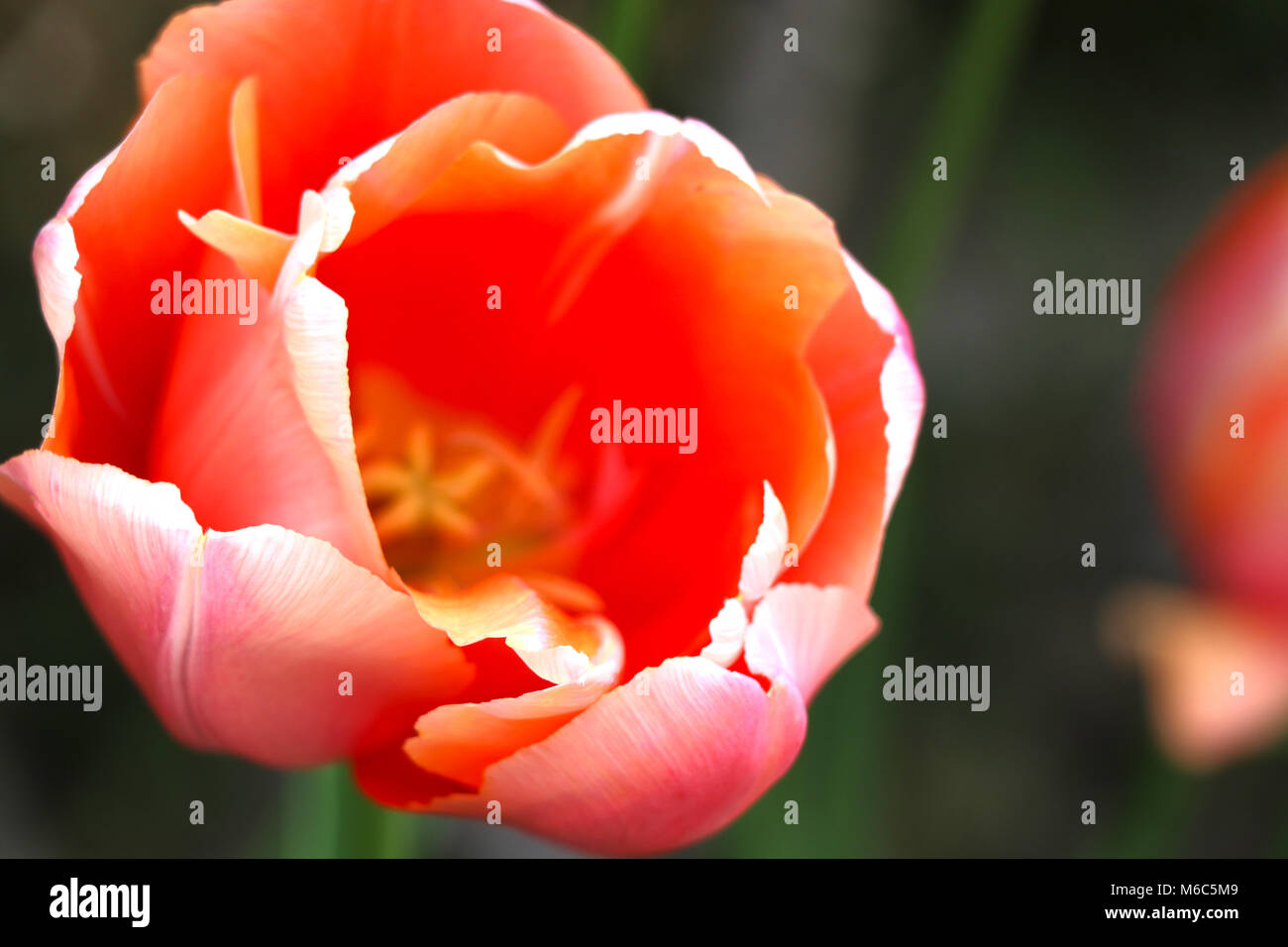 Closed flower buds stock photos closed flower buds stock images beautiful flowers in nature closed view of flowers stock image izmirmasajfo