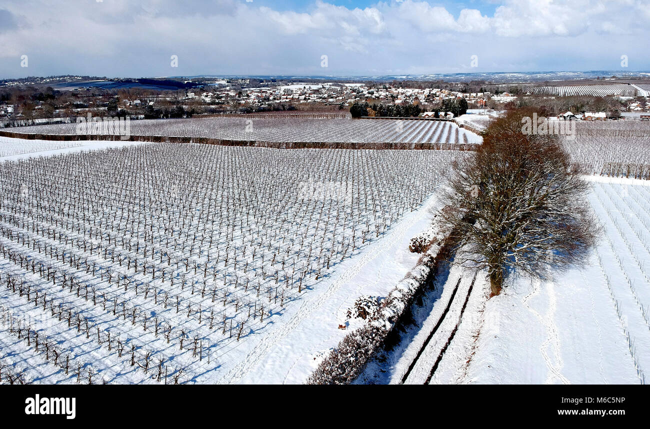 An aerial  view of snow covered Kent orchards - Stock Image