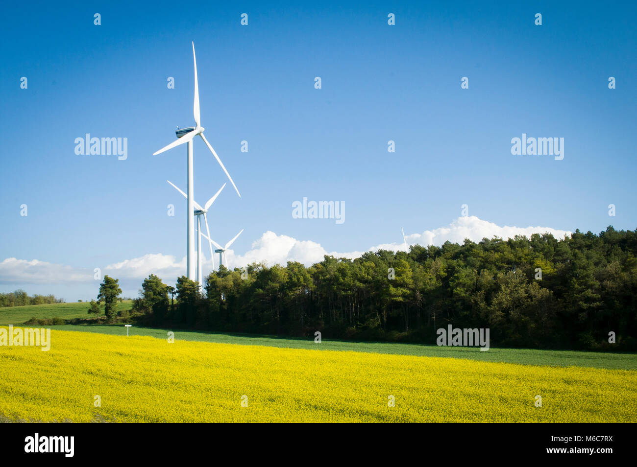 Rural landscape with colza and cultivated field - Stock Image