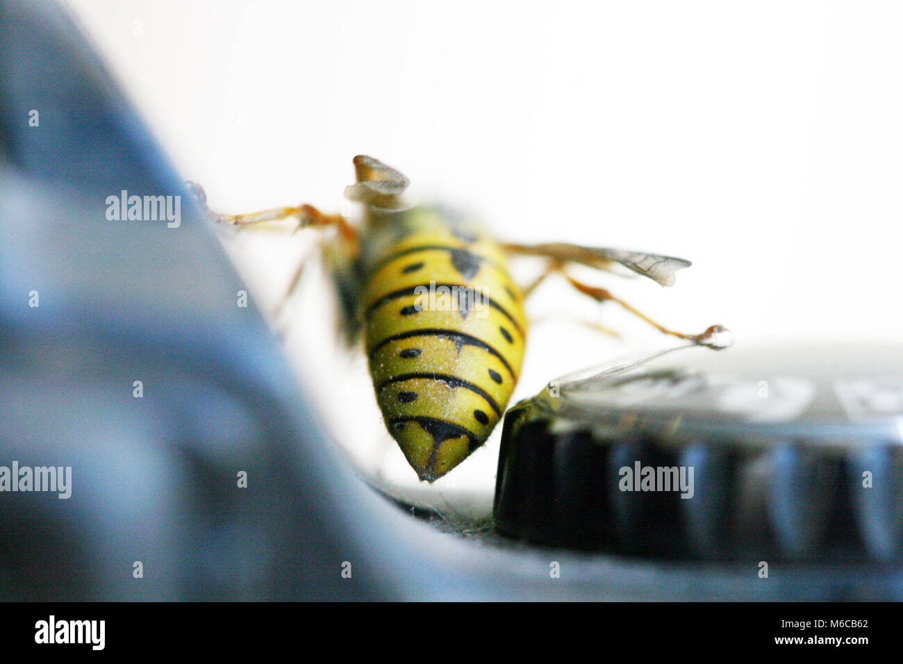 Picture of a Wasp on a digital camera controls - Stock Image