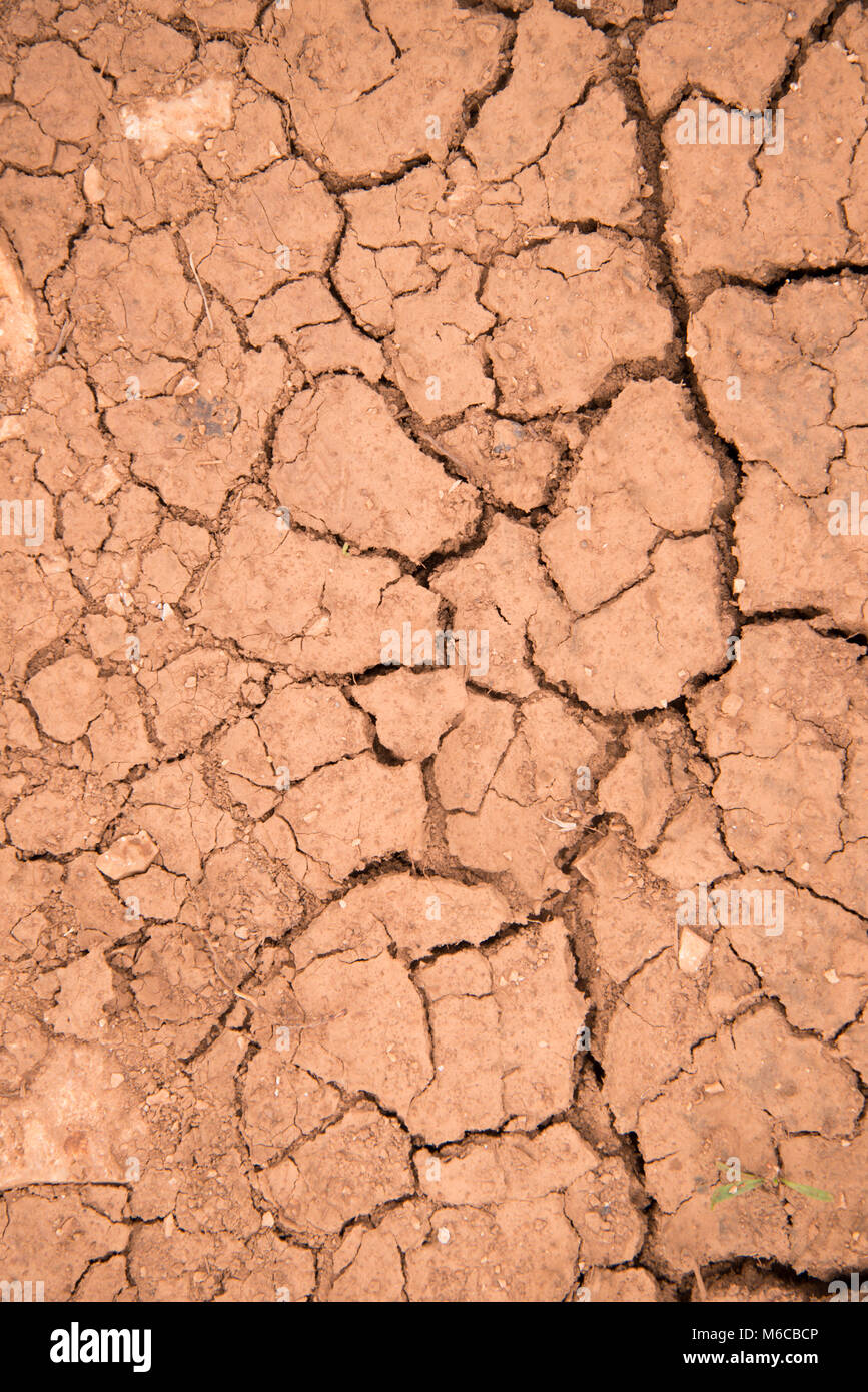 Picture of a Dry and cracked earth texture - Stock Image
