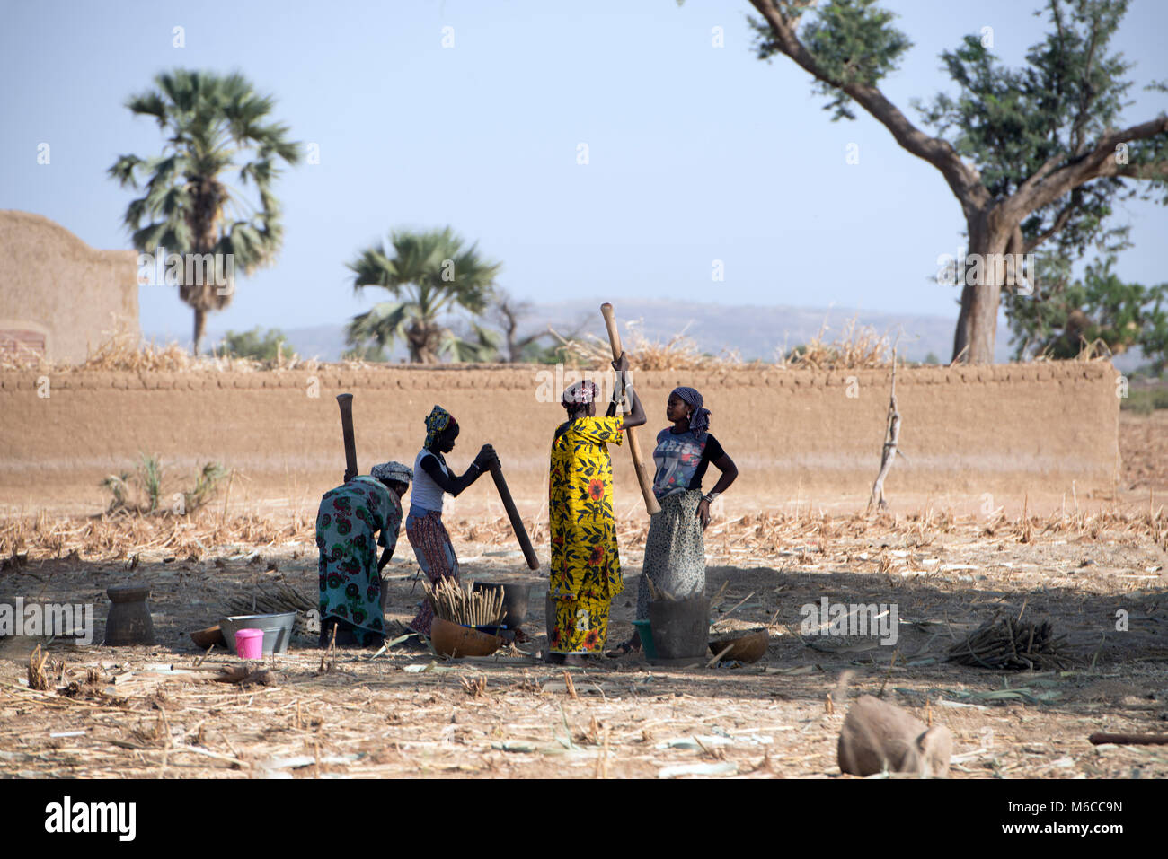 Indigenous Fulani women pounding millet by hand at harvest time. Mali, West Africa. - Stock Image