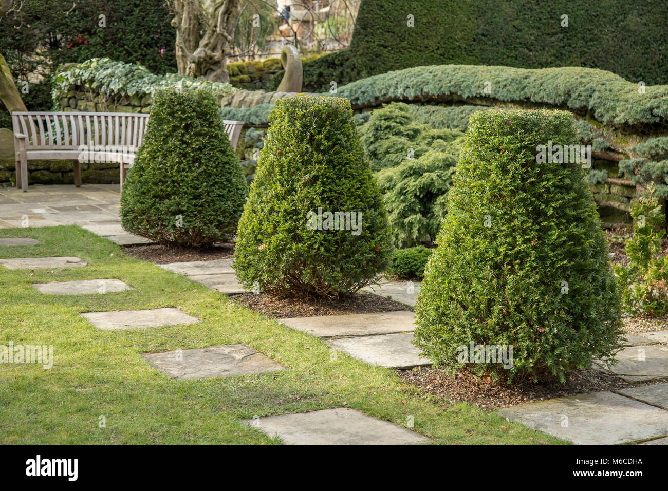 Shaped yew trees in a corner of York Gate Garden, Adel, Leeds Stock Photo