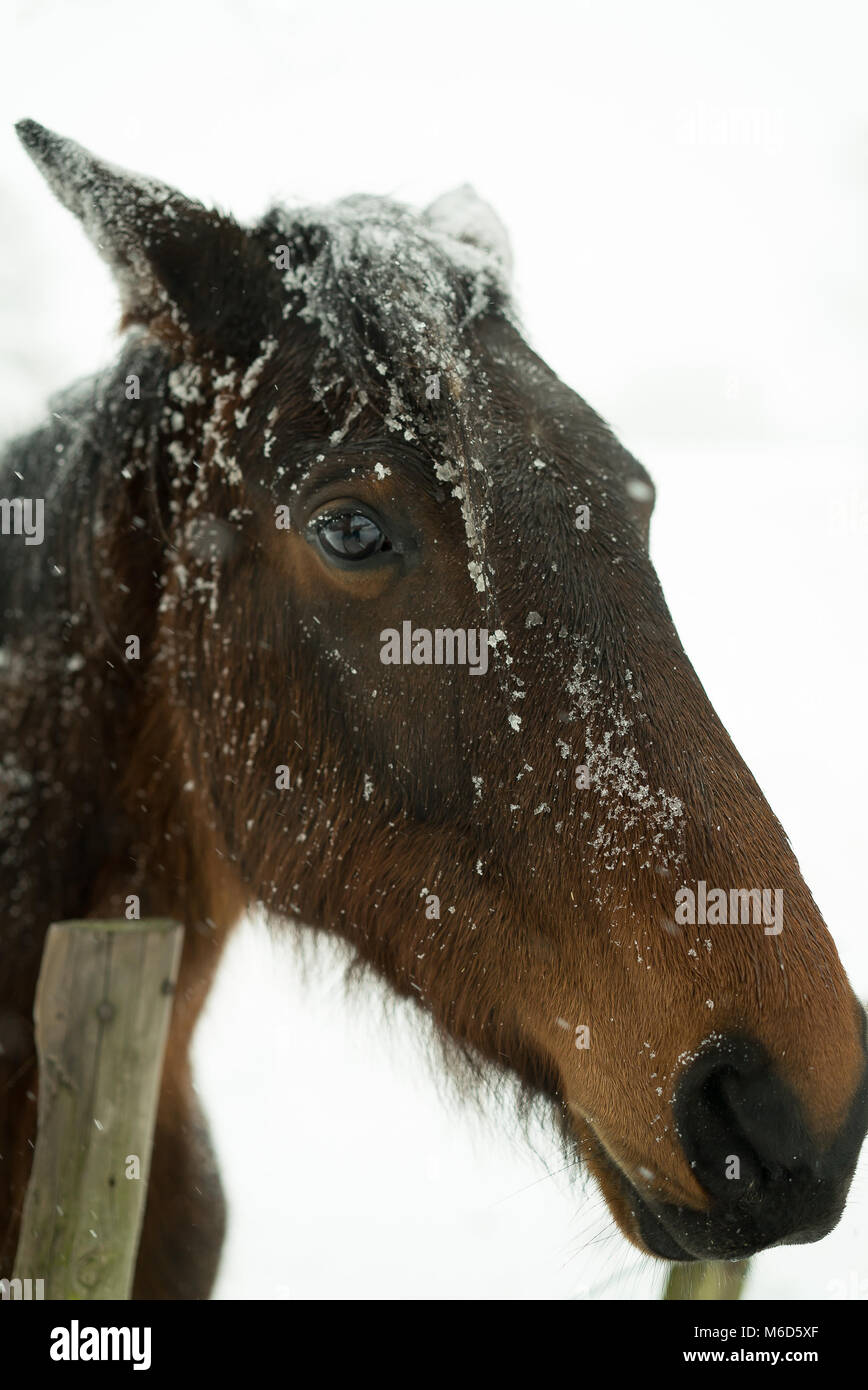 Kidderminster, UK. 2nd March, 2018. UK weather: as the arctic freeze continues and Kidderminster is hit by blustery, - Stock Image