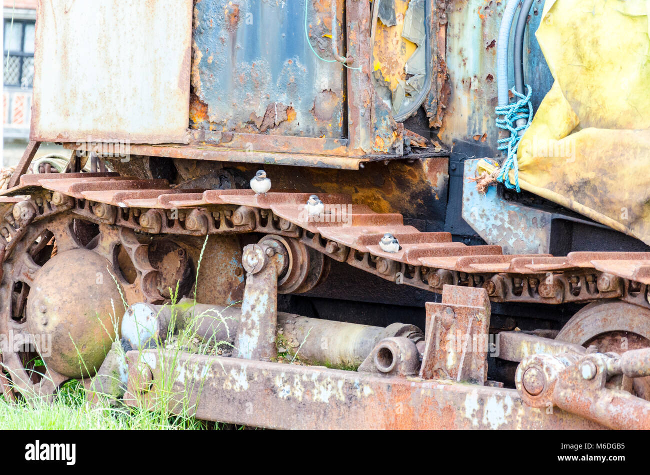 Three recently fledged young swallow chicks on rusty equipment on Aldeburgh beach, Suffolk, UK Stock Photo