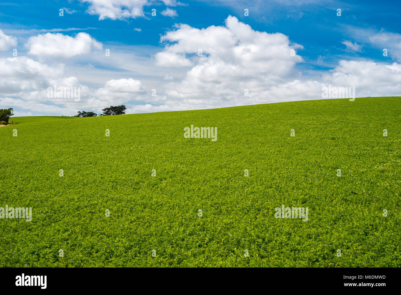 Landscape With Green Fields And Blue Sky Background