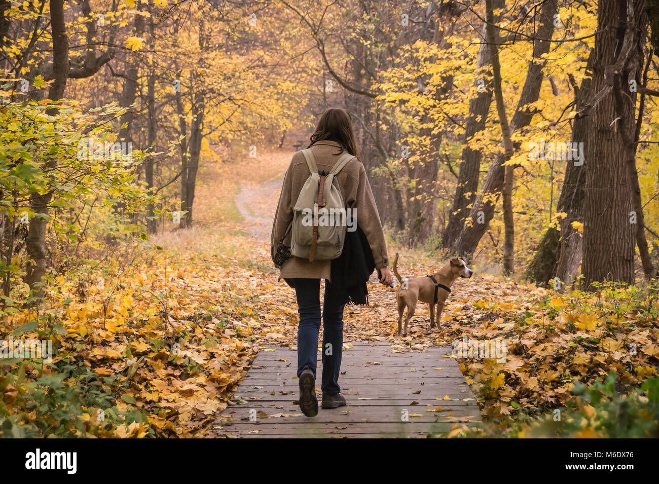Young female person and her pet staffordshire terrier take a walk in the forest and enjoy beautiful october nature Stock Photo