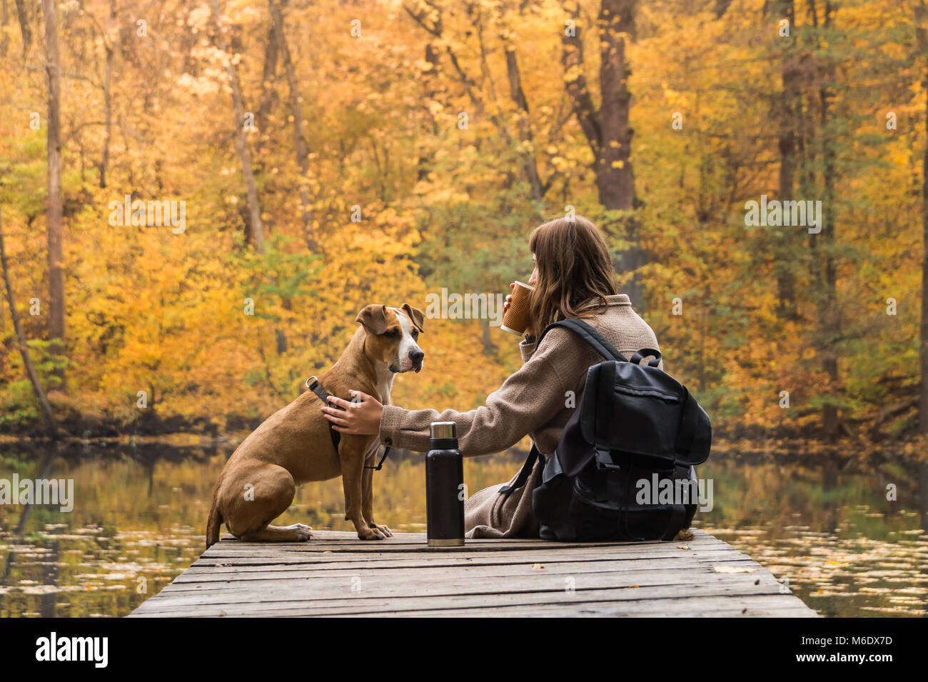 Young female on a trip to nature park having rest near lake with her dog and looking at bright yellow autumn trees - Stock Image