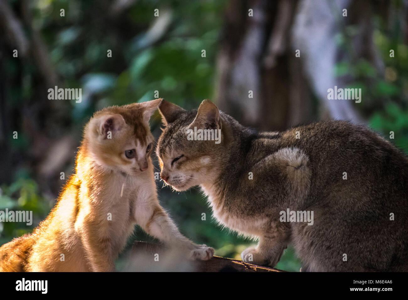 Motherhood of wildlife - Stock Image