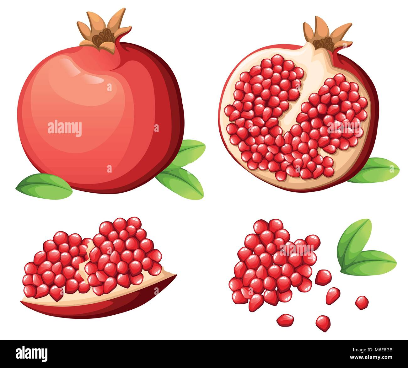 Pomegranate and fresh seeds of pomegranates. Vector illustration of opened pomegranate. Vector illustration for - Stock Vector