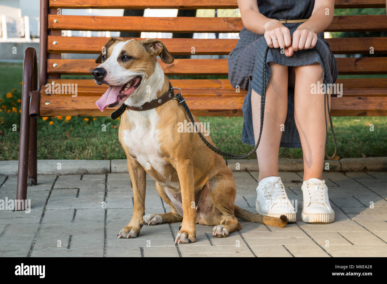 Cheerful and kind dog sits next to her owner at park in the city - Stock Image